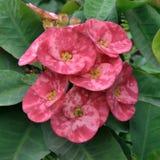 blommar sorgsenhet Arkivfoto