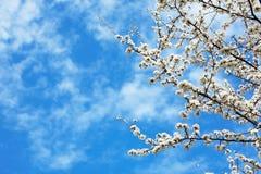 blommar springtime Royaltyfria Foton