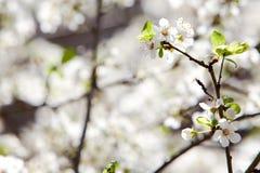 blommar springtime Arkivbild