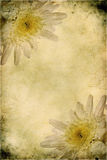 blommar tappning Fotografering för Bildbyråer