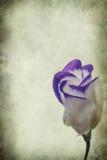 blommar tappning royaltyfria bilder