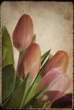 blommar tappning Royaltyfri Fotografi