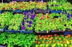 Blommar till salu! Royaltyfria Foton