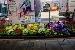 Blommar till salu i en marknad Arkivbilder