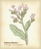 blommar tobak vektor illustrationer