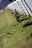 blommar tombstonen royaltyfri bild