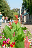 blommar townen Arkivbilder