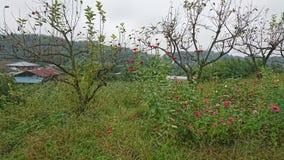 blommar trän Arkivbild