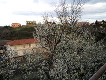 blommar treen Arkivbild