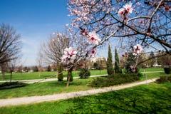 blommar treewhite Arkivbilder