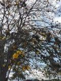blommar treeyellow Arkivfoto