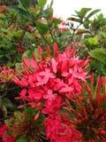 blommar trevligt Arkivfoto