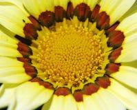 blommar trevligt Royaltyfri Foto