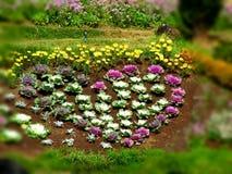 Blommar trevligt i doiinthanon Arkivbilder