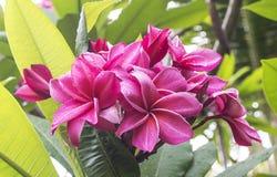 blommar tropiskt Fotografering för Bildbyråer