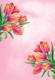 blommar tulpan Arkivfoton