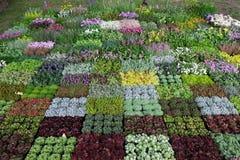 Blommar utsatt på Floraart, trädgårds- utställning för international 52 i Zagreb Arkivfoto
