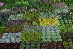 Blommar utsatt på Floraart, trädgårds- utställning för international 52 på sjön Bundek i Zagreb Arkivfoton