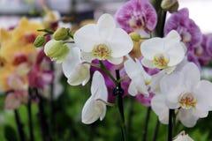 Blommar utsatt på Floraart, trädgårds- utställning för international 52 på sjön Bundek i Zagreb Arkivbild