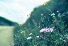 blommar vägen arkivbild