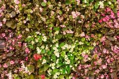 Blommar väggbakgrund Arkivbilder