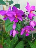 Blommar vänner royaltyfri foto
