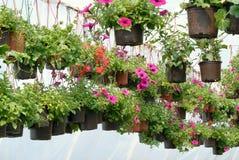 blommar växthuset Arkivfoton