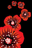blommar vallmon Royaltyfri Illustrationer