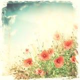 blommar vallmored Arkivbild