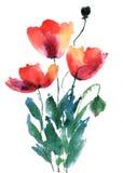 blommar vallmored Royaltyfri Foto
