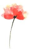 blommar vallmored Arkivbilder
