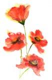 blommar vallmored Royaltyfri Fotografi