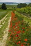 blommar vallmowayside Arkivbild