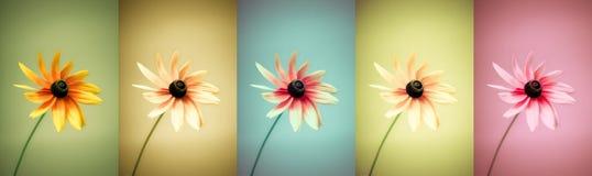 blommar variation Royaltyfria Foton