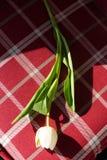 blommar vasen Arkivfoto