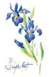 blommar vattenfärg Arkivfoton
