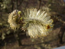 Blommar videt Arkivfoto