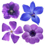 blommar violeten Royaltyfri Fotografi