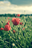 blommar violeten Royaltyfria Bilder