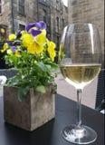 blommar vit wine royaltyfria bilder
