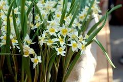 blommar vit yellow Arkivbilder