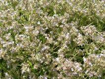 blommar vitt wild arkivbilder