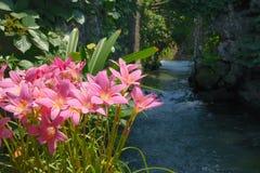 blommar waterside Royaltyfri Foto