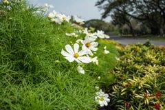 blommar white Arkivbilder