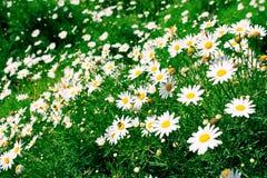 blommar white royaltyfri bild