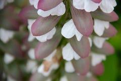 blommar white Arkivfoton
