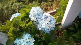 blommar white royaltyfria foton