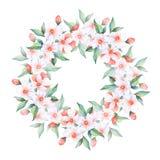 blommar white Blom- krans för vattenfärg, rund ram Arkivfoto