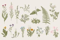 blommar wild örtar bostonian Uppsättning royaltyfri illustrationer