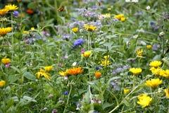 blommar wild Fotografering för Bildbyråer